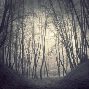 fog.forest