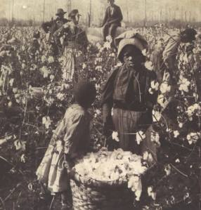 cottonfields.afroamerican.slavery