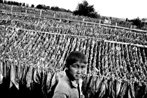 Kazakhstan_Tobacco.child.labour