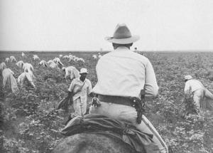 Cotton.blacks.whiteGuard