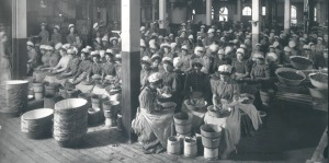 Heinz factory cleaning strawberries before canning 1904