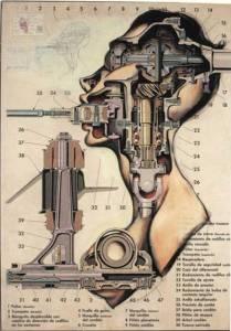Fernando Vicente.anatomy