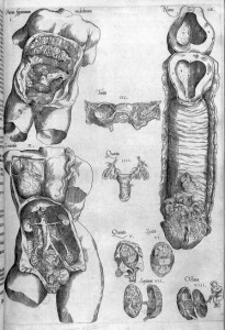 16th century.1553.organs